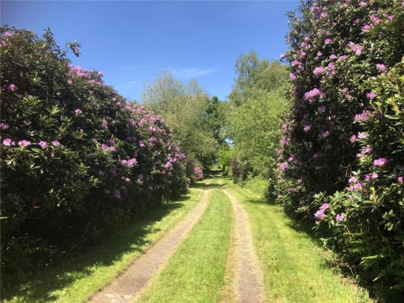 Rhododendron Drive